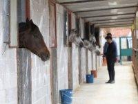 Ankaralı genç atlara olan sevgisiyle sağlık sektöründen ayrıldı çiftlik işletmeye başladı