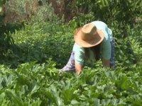 """""""Dede mirası"""" organik tarım için yöneticiliği bırakan kadın girişimci semt pazarlarıyla tüketiciye ulaşıyor"""
