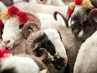 Veteriner hekimler hayvancılık için Kurban Bayramı hazırlıklarının teşvik edilmesini istedi