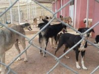 Mardin'de belediye Sokak Hayvanları Rehabilitasyon Merkezi'ne yönelik iddialarla ilgili açıklama yaptı