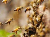 Tekirdağ'da arıların soktuğu 5 kişiden biri öldü
