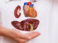Denizli'de beyin ölümü gerçekleşen iki kişiden alınan organlar, nakil bekleyen hastalara umut oldu
