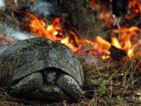 Adana'daki orman yangınlarında yaralanan hayvanlar tedavi ediliyor