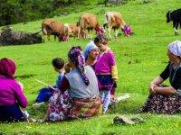 Karadeniz yaylalarında kadınlar kışa hazırlık için çayır biçiyor