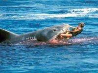 Avustralya'da köpekbalığı saldırısına uğrayan sörfçü hayatını kaybetti