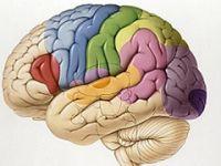 Beyne, 'hücre üret' diyen ilaç