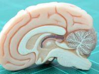 Beyni yönetmenin yolları