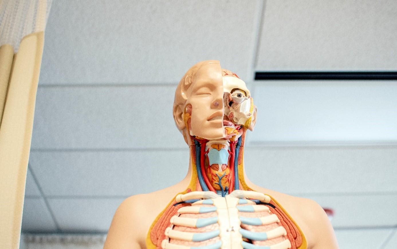 ortopedi-nedir-ve-hangi-hastaliklara-bakar-1.jpg