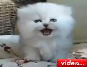 Sevimli kedi yavrusu