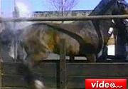 Atın intikamı büyük oldu