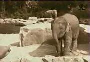 Filin intikamı